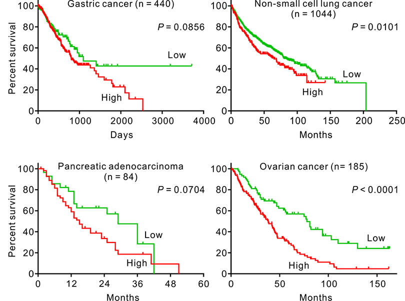 Figure 2. MIR-2 expression correlates with shorter overall survival of cancer patients.